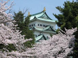 風情ある名古屋城と満開の桜の写真・画像素材[3039123]
