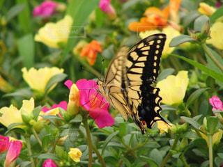 お花畑とアゲハチョウの写真・画像素材[3051208]