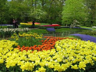鮮やかなキューケンホフ公園の写真・画像素材[3070645]