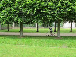 新緑の庭園をさわやかにサイクリングの写真・画像素材[3143208]