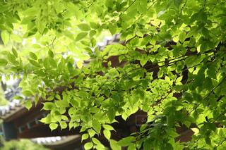 風情ある新緑と木漏れ日の写真・画像素材[3148434]