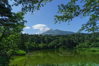 利尻島姫沼の美しい新緑の写真・画像素材[3202361]