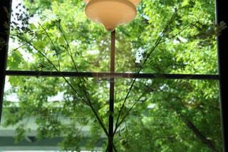 窓辺の新緑に癒されての写真・画像素材[3207754]