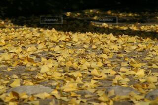 落ち葉と足跡の写真・画像素材[3719912]