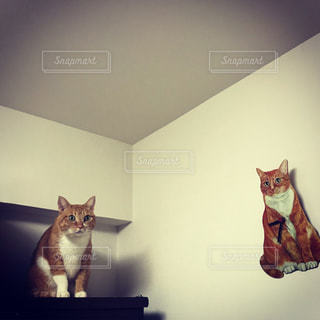 猫,驚き,サプライズ,びっくり