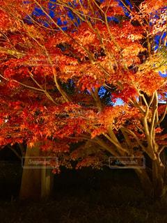 まっかな秋の写真・画像素材[1667145]