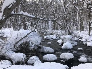雪に覆われた奥入瀬の写真・画像素材[1732564]