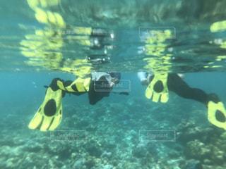 水中での写真・画像素材[1799492]