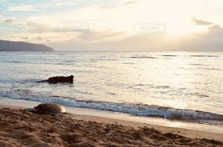 自然,海,空,夕日,屋外,ビーチ,砂浜,波,水面,ハワイ,ハワイ島,ウミガメ,亀