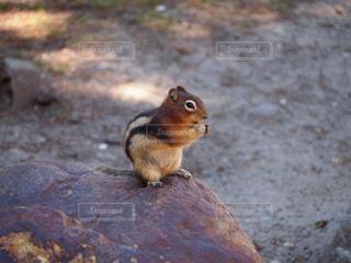 動物,リス,旅行,食べる,地面,カナダ
