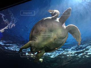 動物,水族館,水中,旅行,カメ,カナダ
