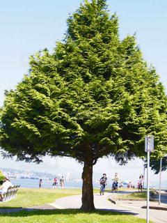 風景,空,公園,屋外,草,樹木,新緑,人,カナダ,日中