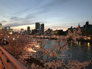 四月の夜桜の写真・画像素材[1849909]