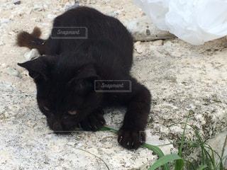 猫,動物,屋外,黒,ペット,子猫,人物,黒猫,ネコ