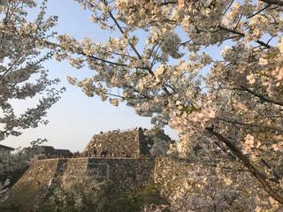 空,花,桜,屋外,ピンク,樹木,石,奈良,さくら