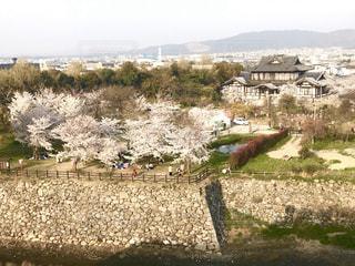 空,桜,屋外,草,樹木,石,奈良,石垣,草木,桜まつり