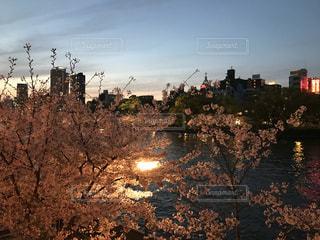 空,桜,川,夕方,樹木,都会,ライトアップ,大阪市,さくら