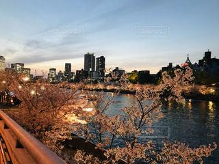空,建物,桜,屋外,川,水面,樹木,ライトアップ,高層ビル,さくら