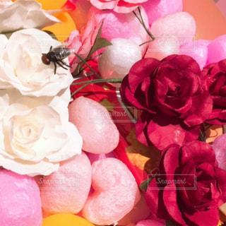 花,ピンク,ハート,ピンク色,pink,ハエ