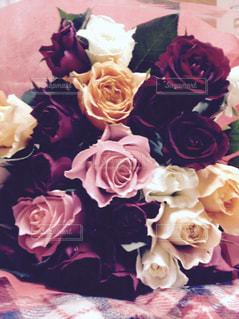 花,ピンク,赤,白,チェック,バラ,オレンジ,記念日,flower,pink