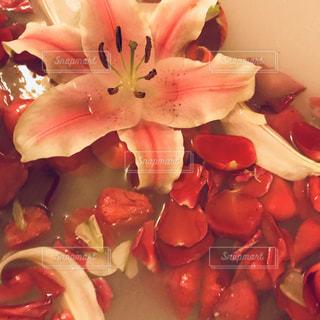 花,ピンク,赤,水,薔薇,百合,浮かぶ