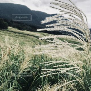 自然,空,秋,山,草,ススキ,草木,原野
