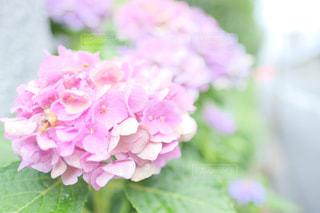 近くの花のアップの写真・画像素材[1458495]
