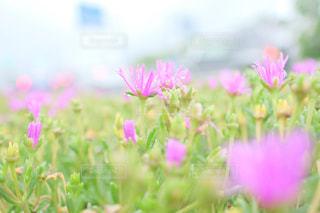 近くの花のアップの写真・画像素材[1458671]