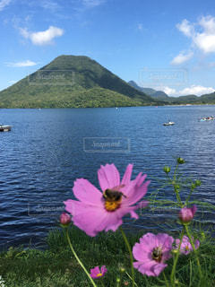 自然,空,花,コスモス,榛名湖