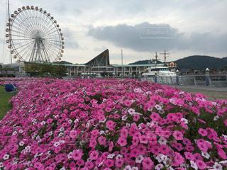 花,屋外,ピンク,樹木