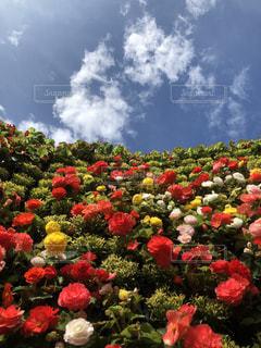 空,花,屋外,カラフル,草,樹木,草木