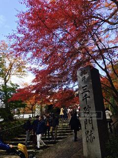 紅葉,秋空