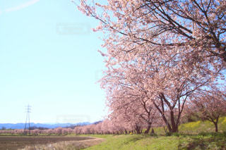 空,花,春,青空,景色,さくら,ブロッサム