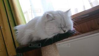 ウィンドウの横に座っている猫の写真・画像素材[1623375]