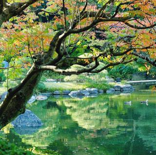 木の隣に水します。の写真・画像素材[1685268]