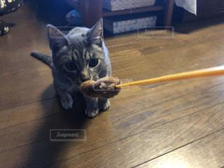 猫の写真・画像素材[2480238]