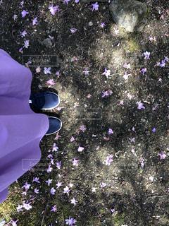 自然,桜,靴,ピンク,散歩,花びら,お花,ラベンダー,スカート,旅行,可愛い,長野,軽井沢,思い出,カジュアル,スニーカー,ピンク色,桃色,ライフスタイル,pink,日中,レジャー・趣味
