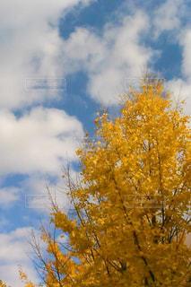 空,秋,紅葉,雲,秋空