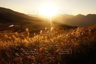 自然,風景,秋,夕日,夕方,山,奈良,10月,曽爾高原,すすき