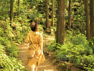 屋外,晴れ,世界遺産,木漏れ日,三重,6月,レジャー,お散歩,和歌山,ライフスタイル,森ガール,熊野古道,お出かけ,中辺路