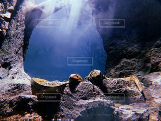 水族館の写真・画像素材[2637775]