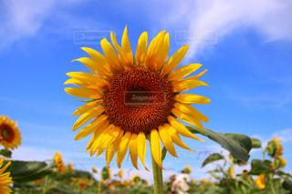 近くに黄色い花のアップの写真・画像素材[1464591]