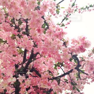 花,春,ピンク,白,景色,明るい,彩,草木