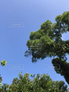空,屋外,樹木,日中
