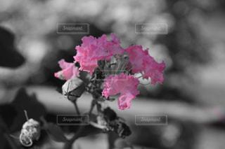 花,ピンク,かわいい,お花,不思議,草木,セレクトカラー