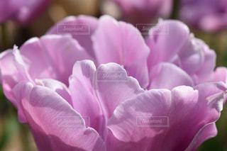 自然,花,ピンク,接写