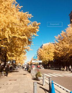 秋,秋空,イチョウ並木,日本大通り