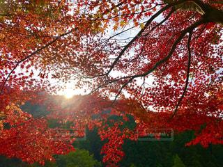 自然,空,秋,紅葉,太陽,秋空,英彦山