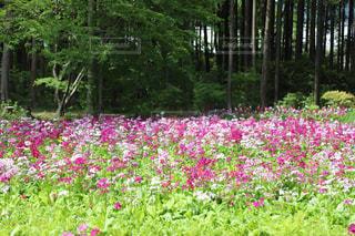 自然,花,屋外
