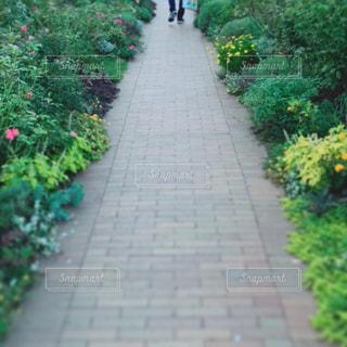 花,屋外,緑,足,歩く,道,癒し,旅行,未来,夢,草木